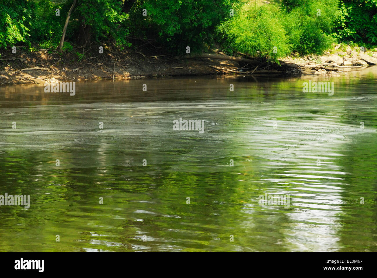 Pollen or scum floating on the Muskingum river in Zanesville Ohio. - Stock Image