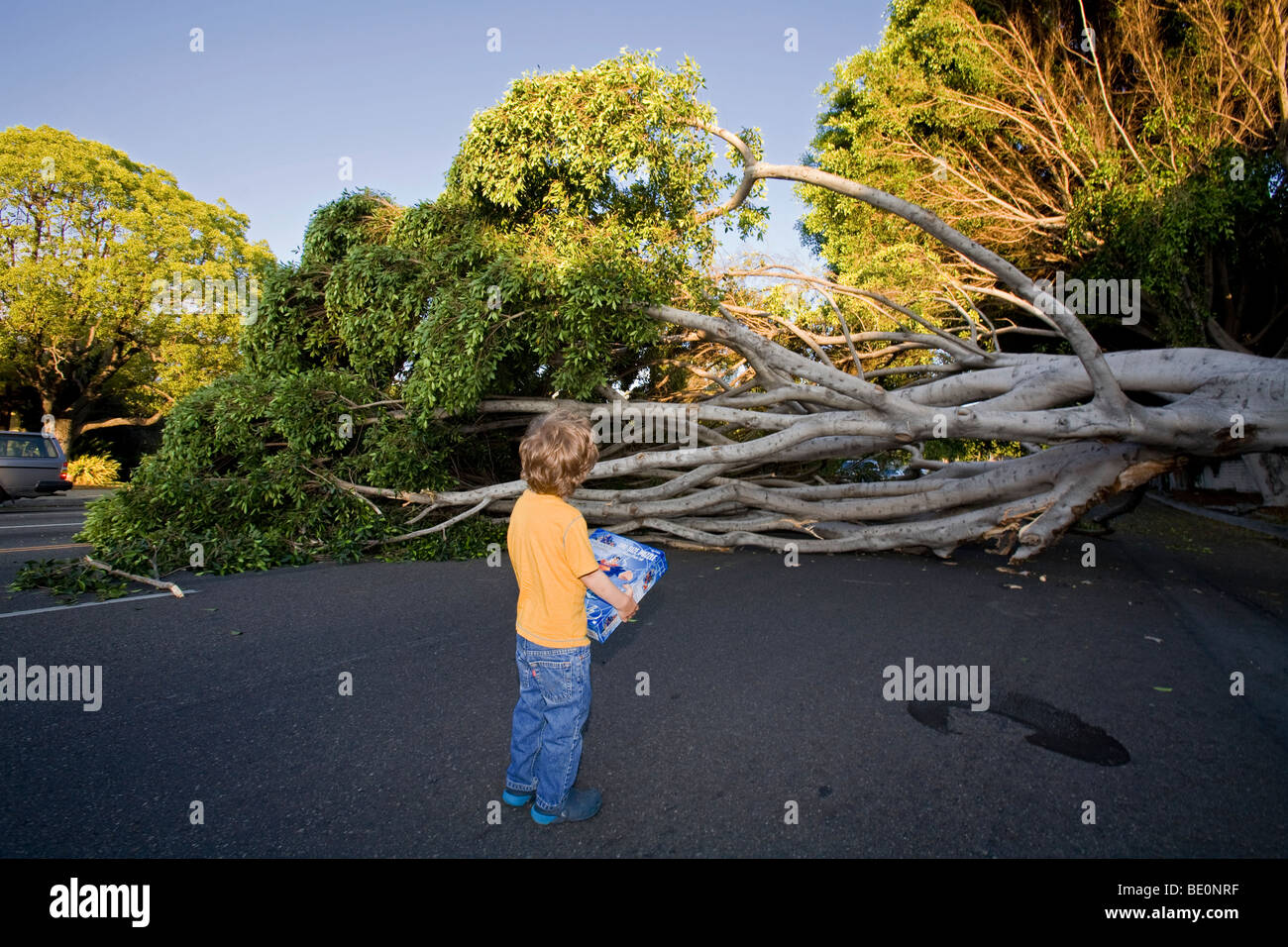 Young boy looking at fallen tree blocking street, Bundy Blvd, Los Angeles, California, USA (MR) Stock Photo