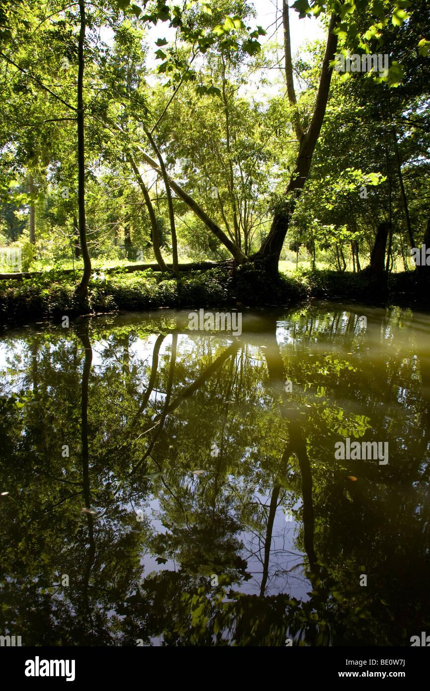 Tree and reflection in the Marais Poitevin, (the Marsh of Poitou) France September 2009 - Stock Image