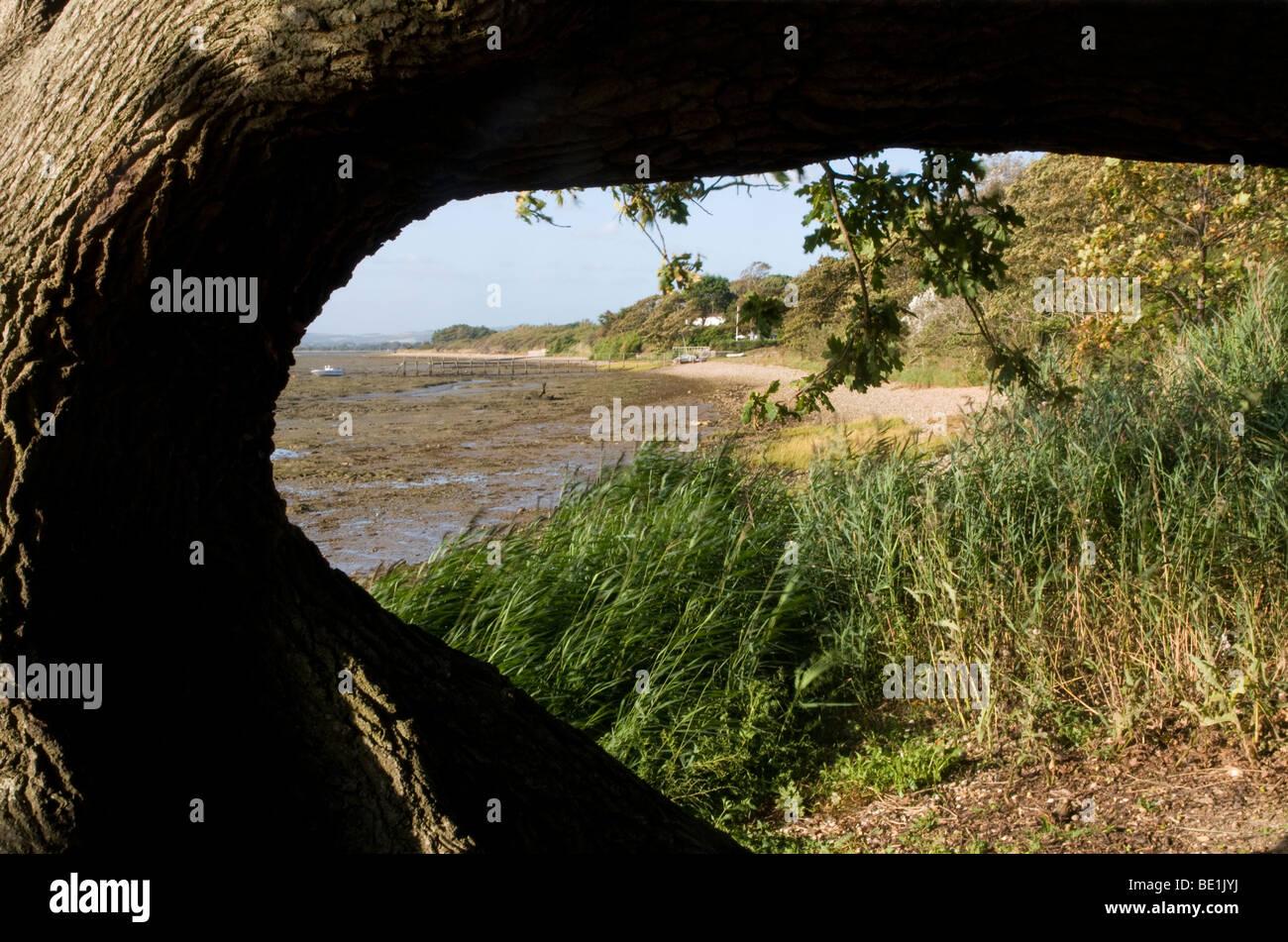 Marine scape  shore line along Chichester Harbour. - Stock Image