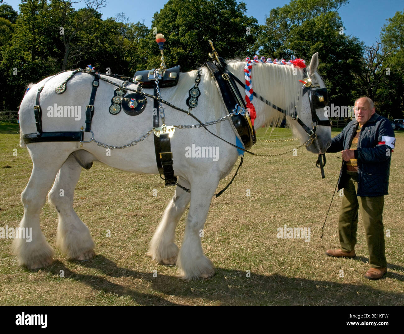 ' Leapley Yeoman' a 11yr shire horse owned by  J. Wilson,Basingstoke wins 1st PRIZE in the Show Harness class - Stock Image