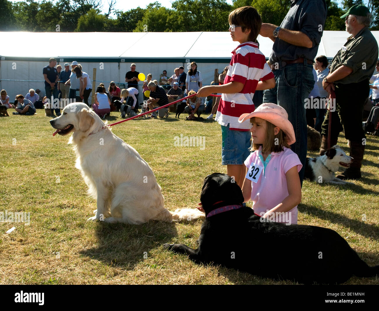 The Henley Show ,dog class event - Stock Image