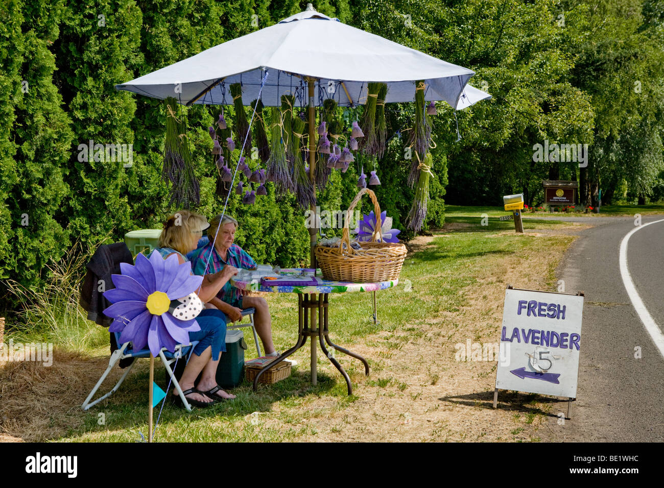 Two women selling fresh lavender near Columbia River Gorge, Oregon - Stock Image