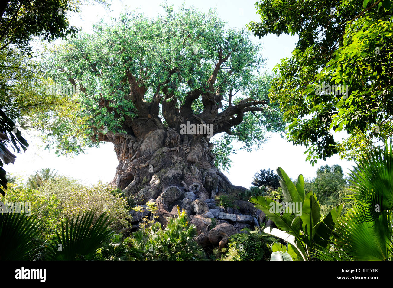 NEW AND HARD TO FIND DISNEY WORLD animal kingdom tree of life garden Postcard