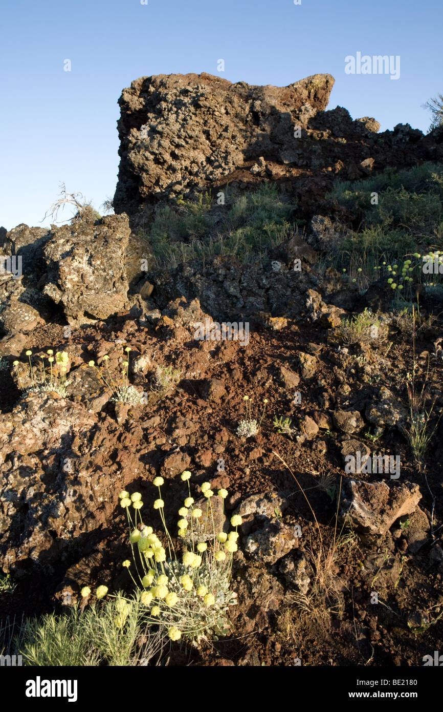 Cinder cones and rare flowers at Craters of the Moon National Monument in Idaho Stock Photo