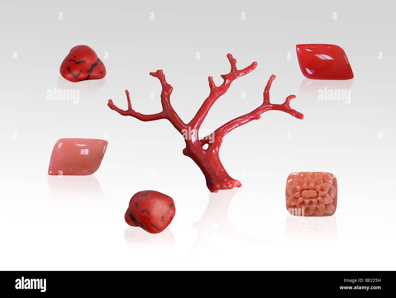 Red and pink coral specimens on white background - Stock Image