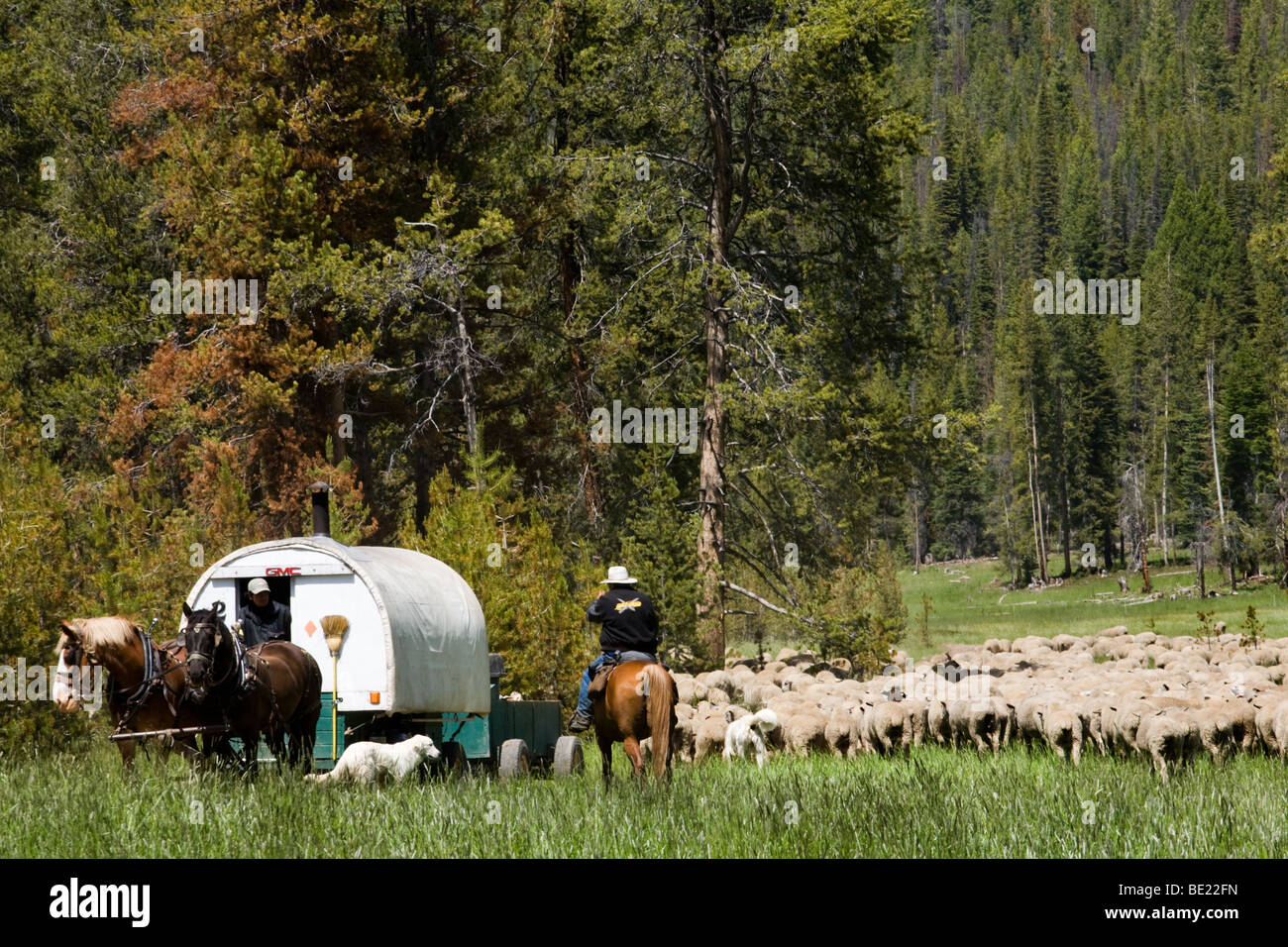 Shepherds and their sheep wagon, in Idaho - Stock Image