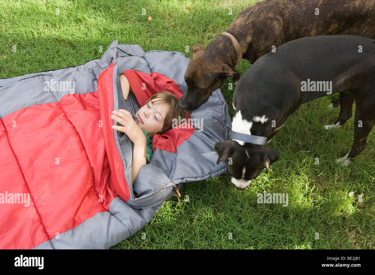 a boy in a sleeping bag is visited by pet dogs - Stock Image