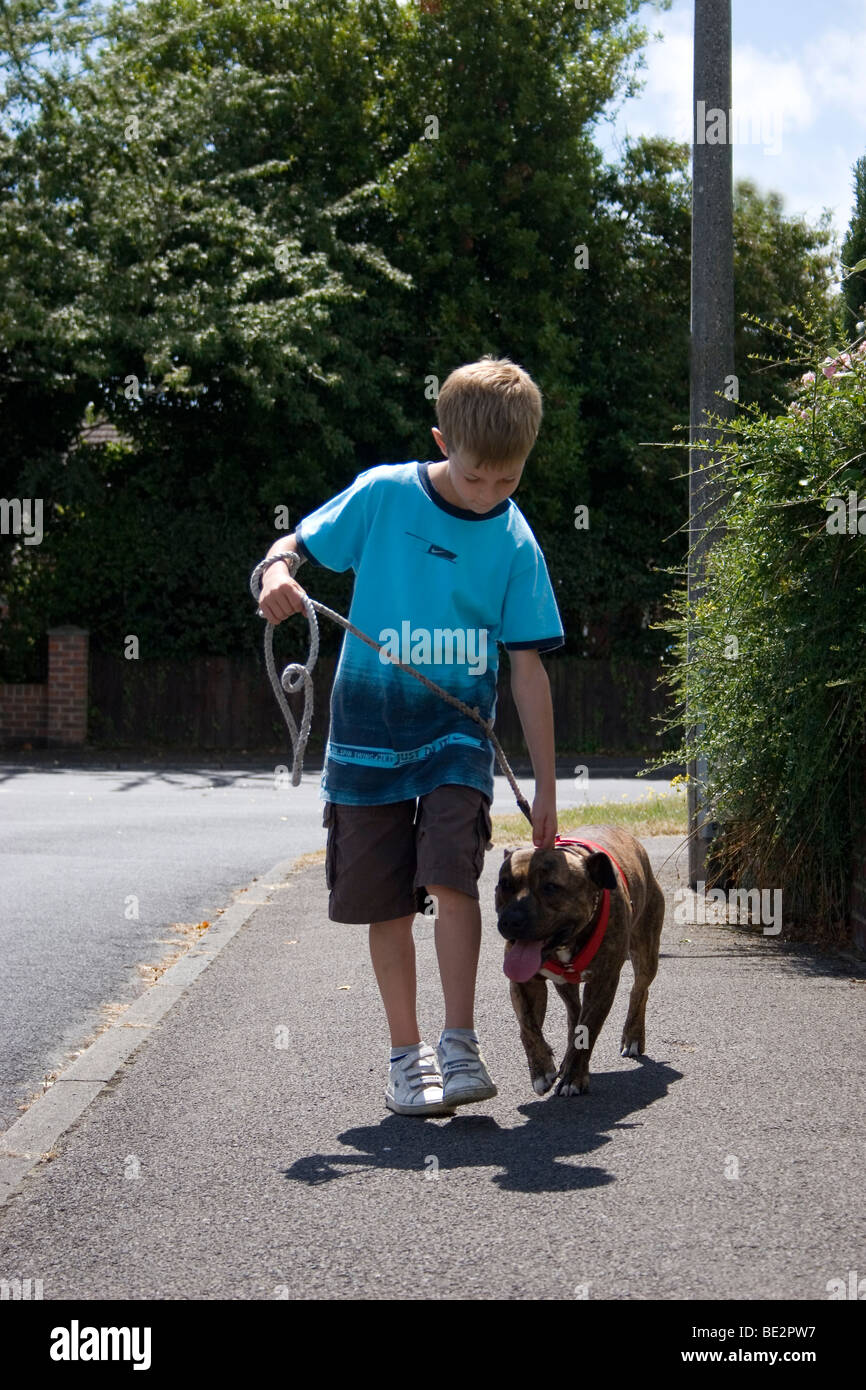 young boy walking his staffordshire bull terrier on lead on street - Stock Image