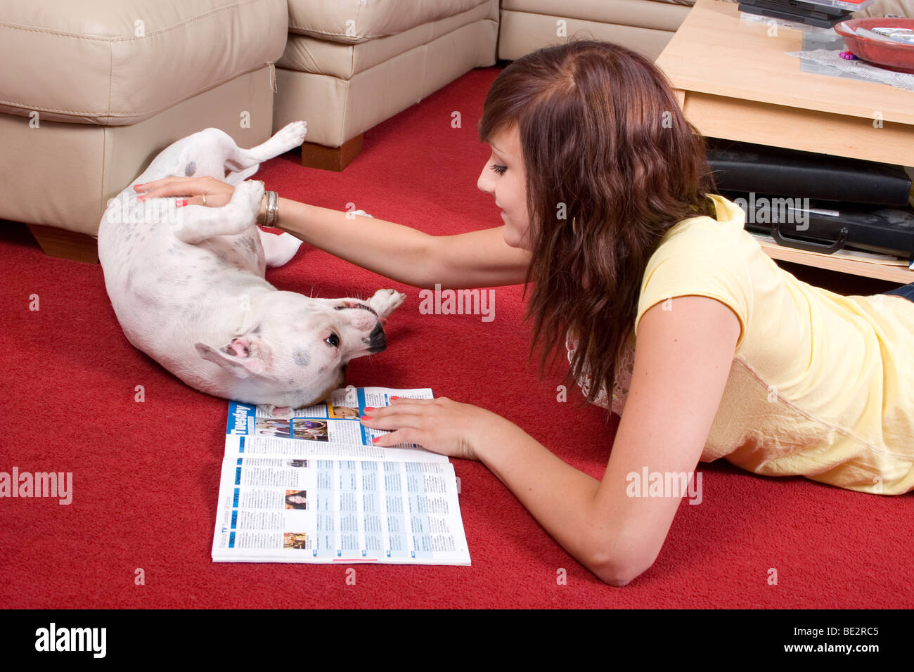 teenage girl playing with staffordshire bull terrier dog while reading magazine - Stock Image