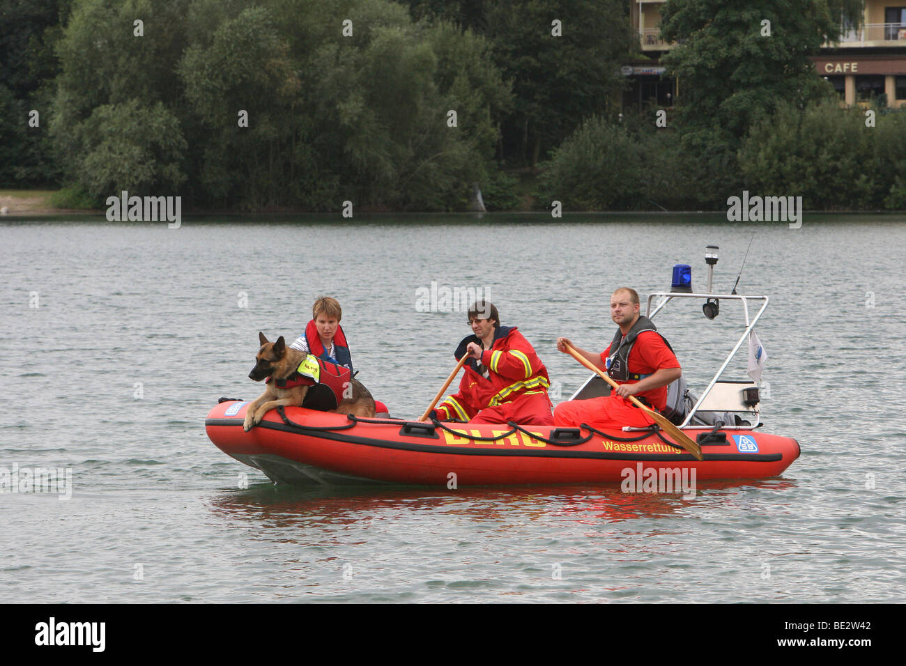 Rescue dog sniffing out a victim, the rescue brigade in Mannheim on Wiesensee lake, Hemsbach, Hesse, Germany, Europe - Stock Image