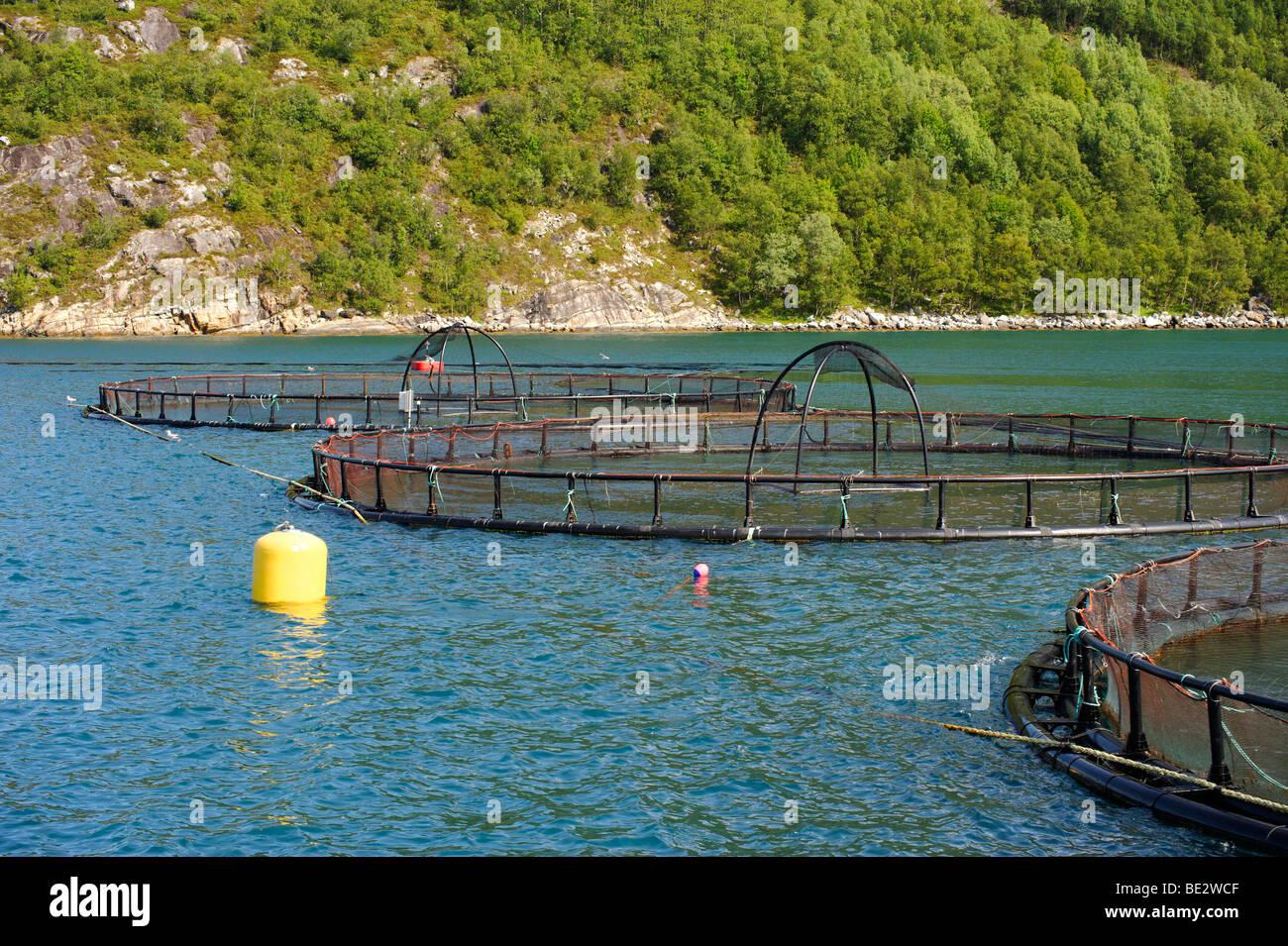 Salmon farm, Holandfjord, Norway, Scandinavia, Europe - Stock Image