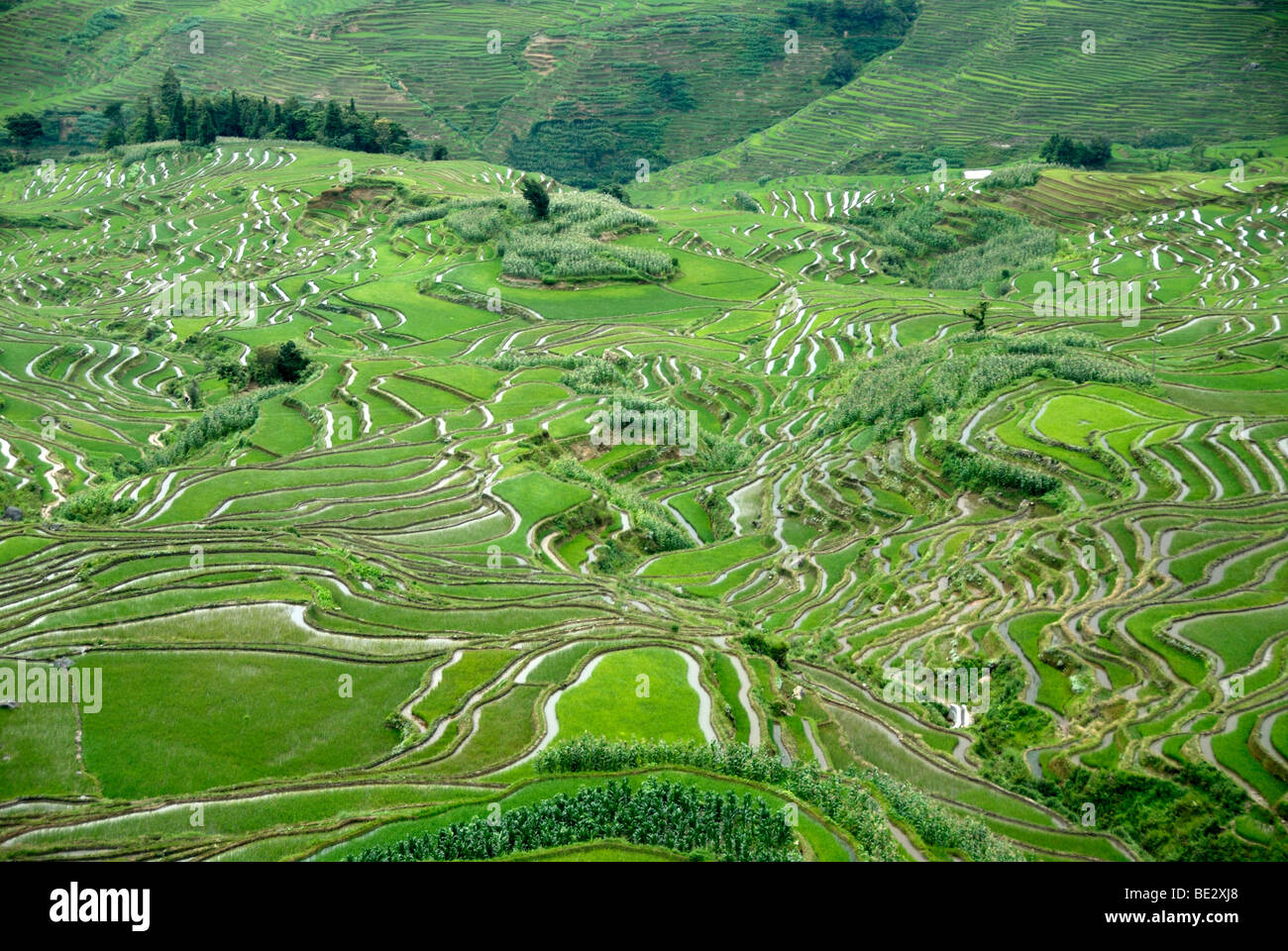 Green rice fields on the hillside, terraced rice fields, Yuanyang, in Xinji, Yunnan Province, People's Republic - Stock Image
