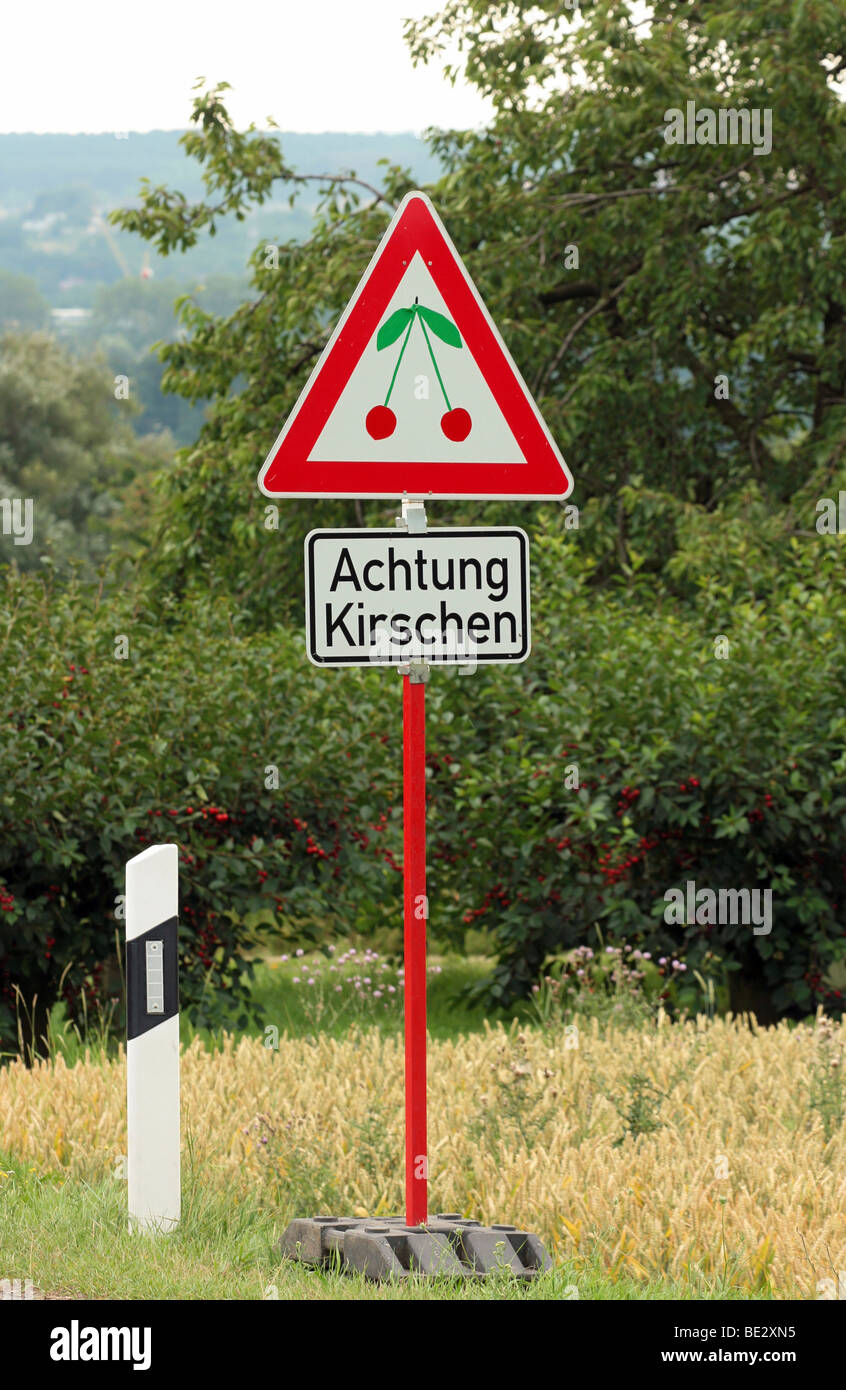 Funny advertising sign in the style of a traffic sign on the roadside, cherries ahead, cherry-growing area of Frauenstein, - Stock Image
