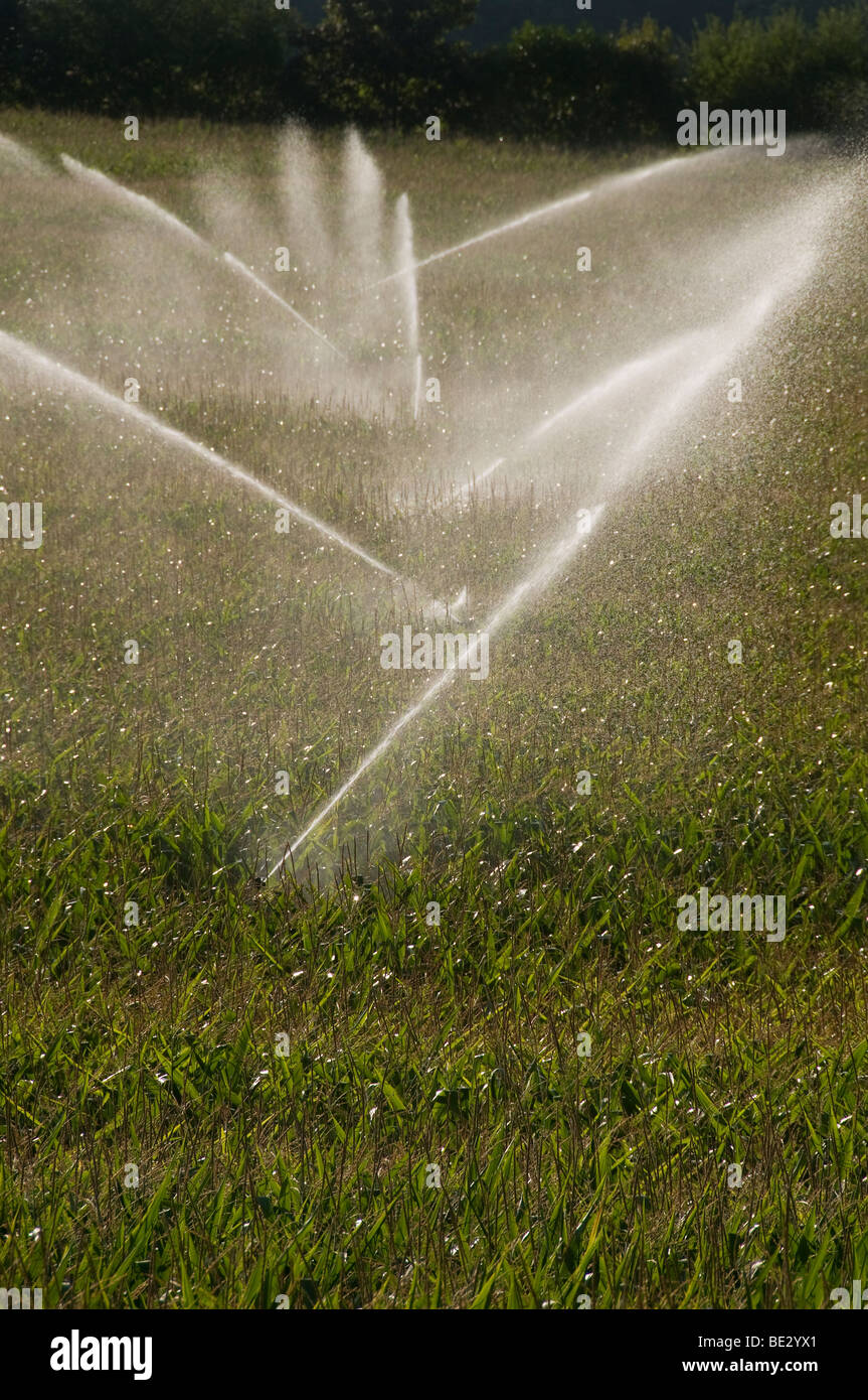 Corn field irrigation system in Charente  ( France) - Stock Image