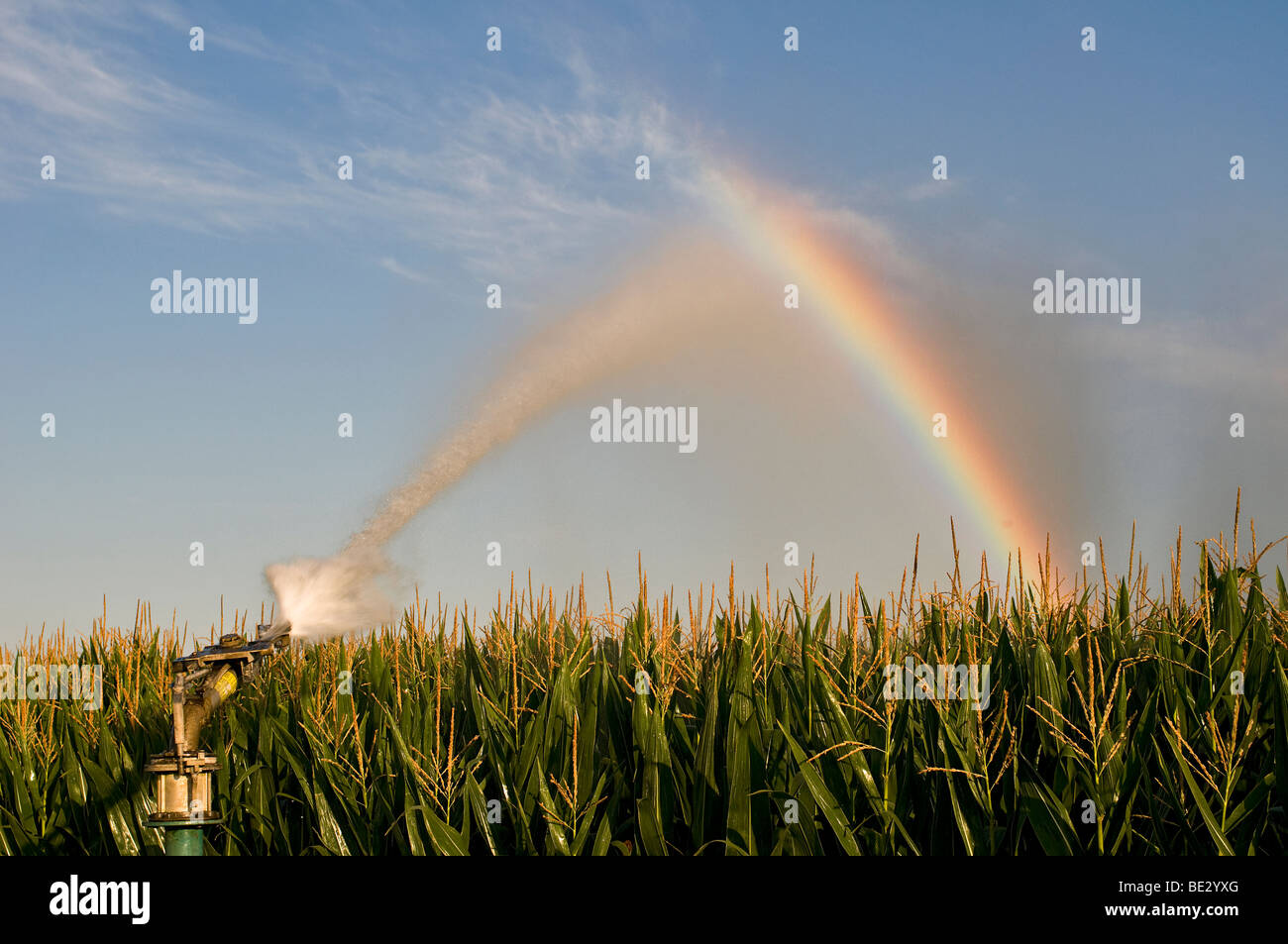 Irrigation of maize field in Charente ( France) - Stock Image