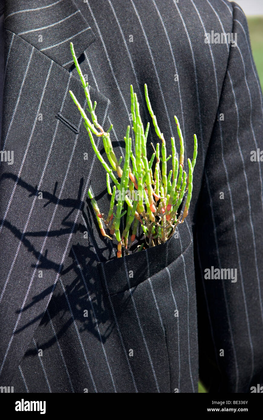 close up of a green plant sticking out of pocket on a pinstriped suit - Stock Image