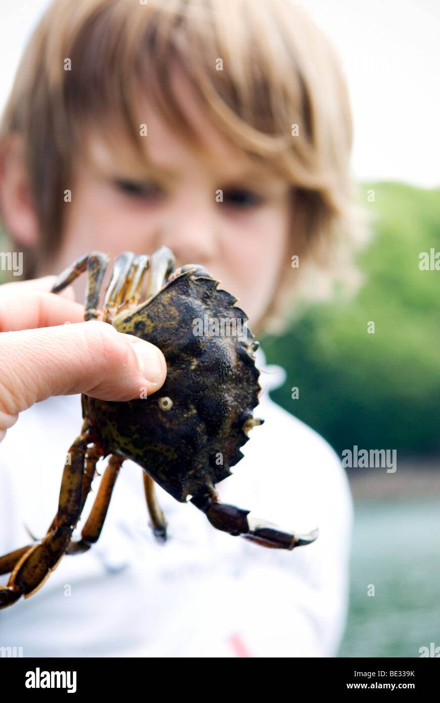 close up of crab being held in front of six year old boy - Stock Image