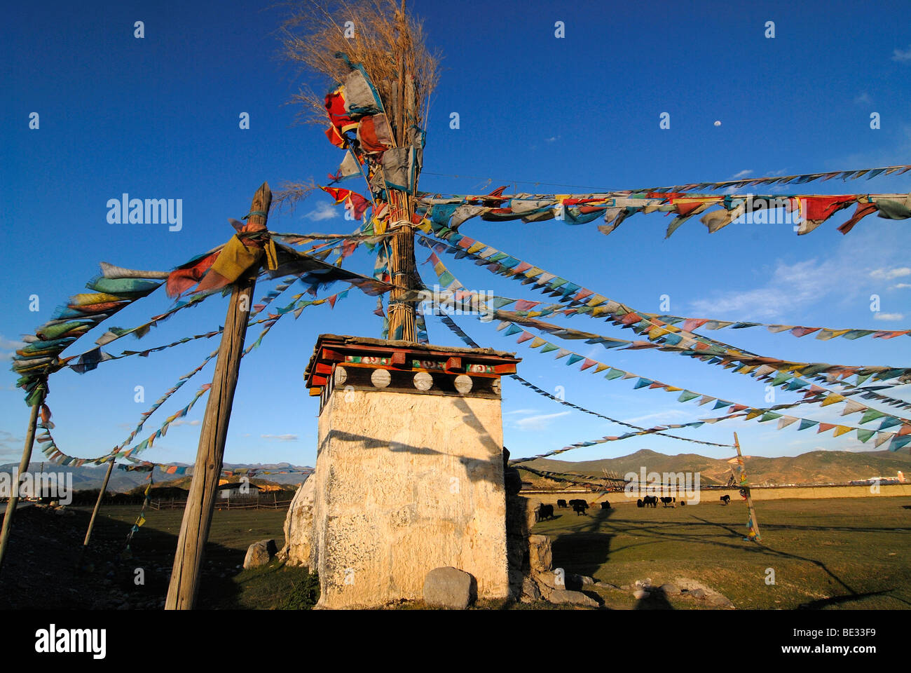 Tibetan chorten with prayer flags in front of yaks (Bos mutus), Tibetan yak, grazing on an highland meadow in front Stock Photo