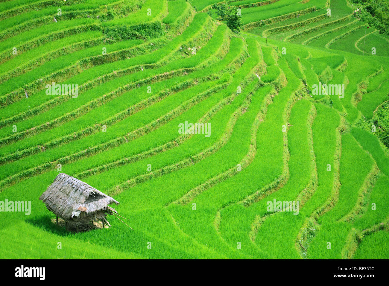 Rice field terraces at northern Vietnam - Stock Image