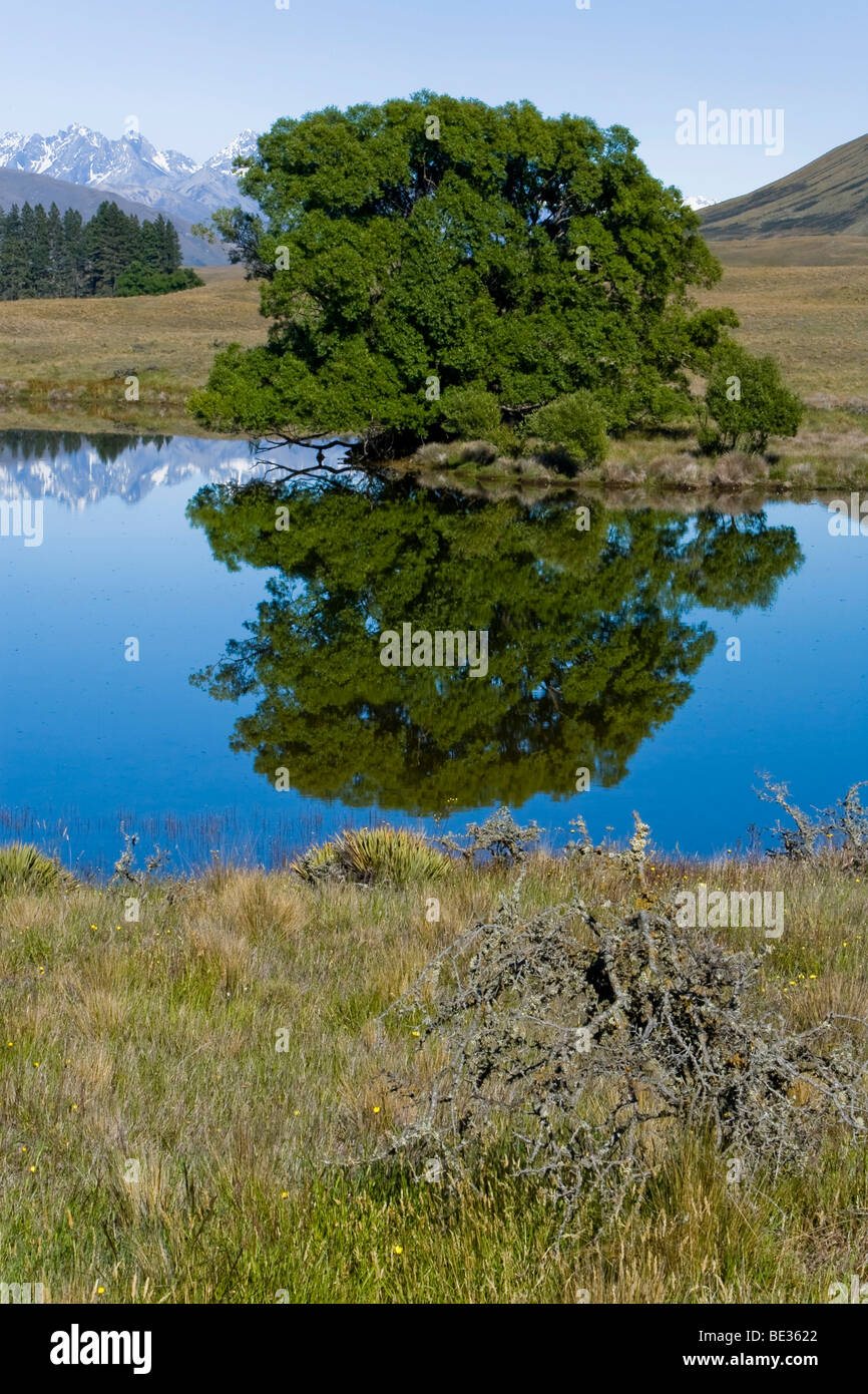 Water reflections of trees and mountains on a lake, Hakatere, South Island, New Zealand - Stock Image
