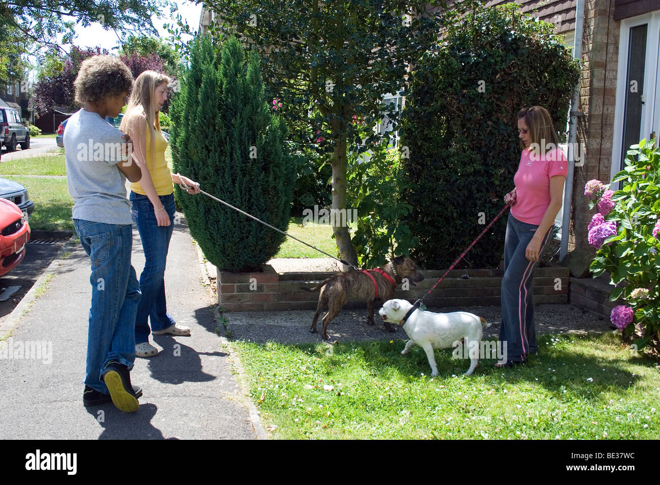neighbours with staffordshire bull terriers chatting in street - Stock Image