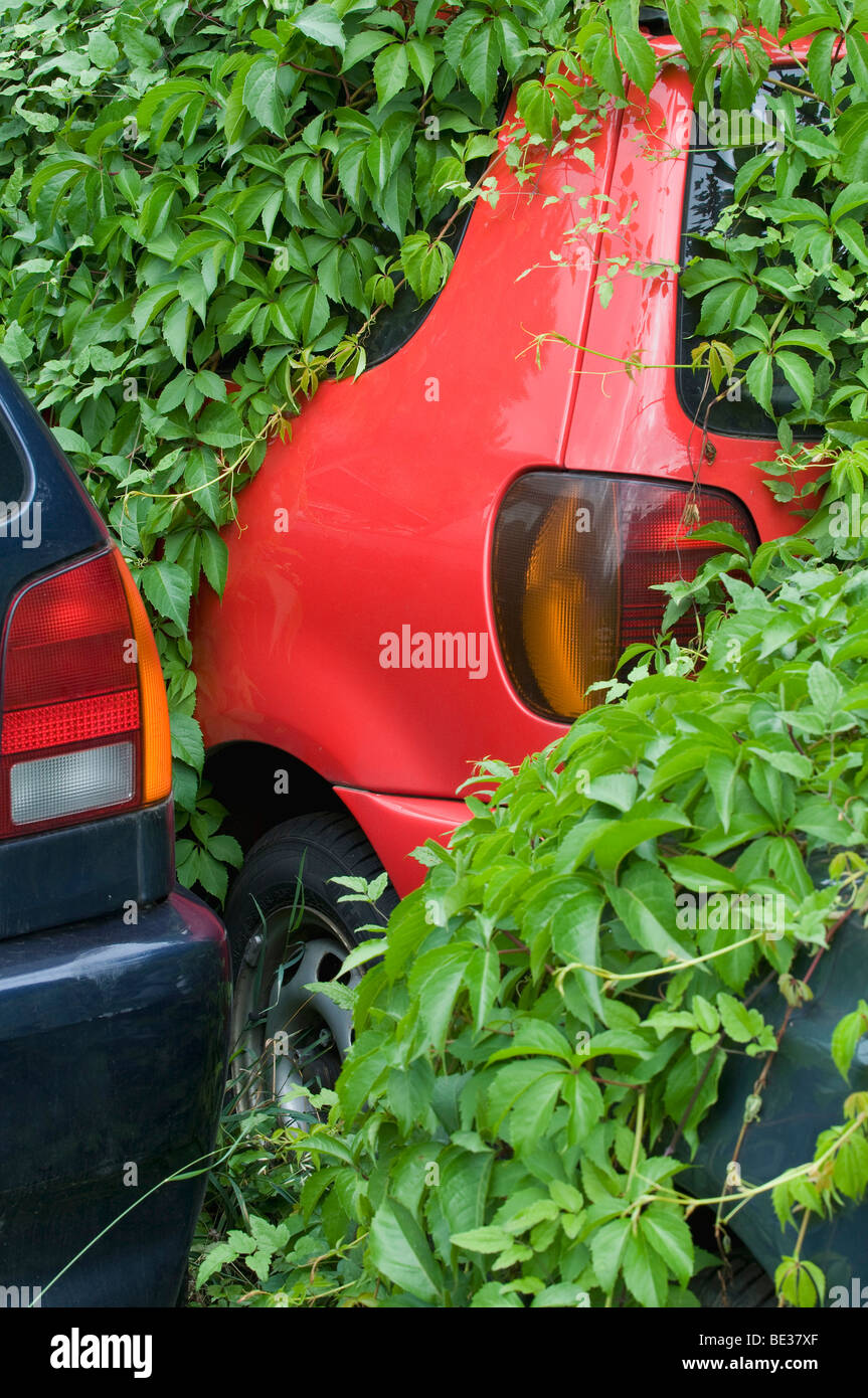 Deluge of used cars after the scrap bonus, overgrown cars waiting for recovery - Stock Image
