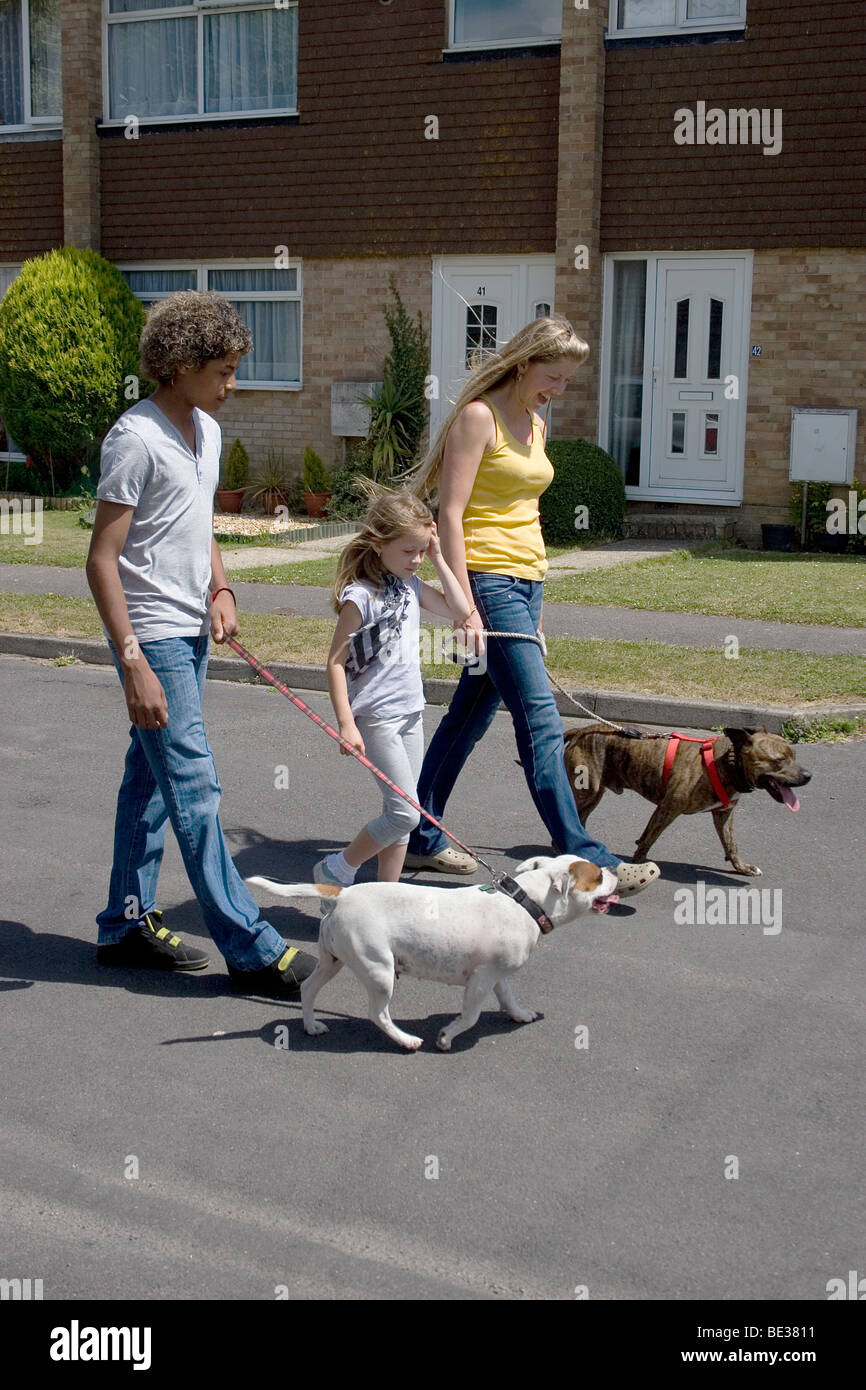 mother and children walking in street with their two staffordshire bull terriers - Stock Image