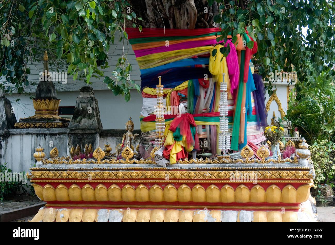 Banyan tree at Boun Khao Salak festival, Savannakhet, Laos - Stock Image