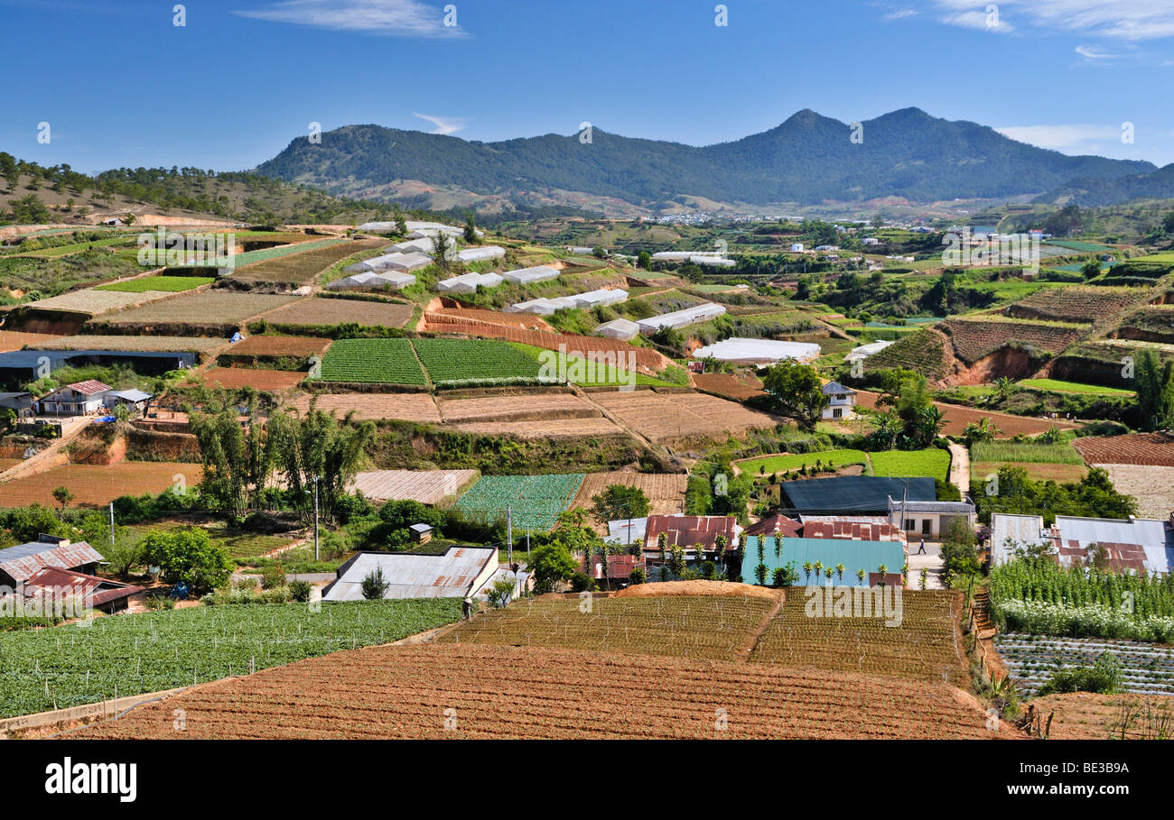 Terraced fields and greenhouses, agricultural area in Dalat, Vietnam, Asia - Stock Image
