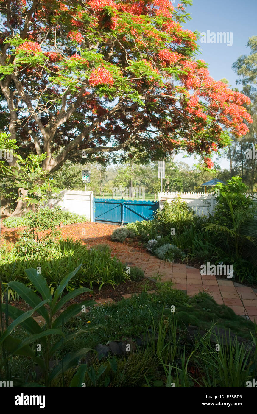 Backyard garden, Fairfield, Queensland, Australia - Stock Image