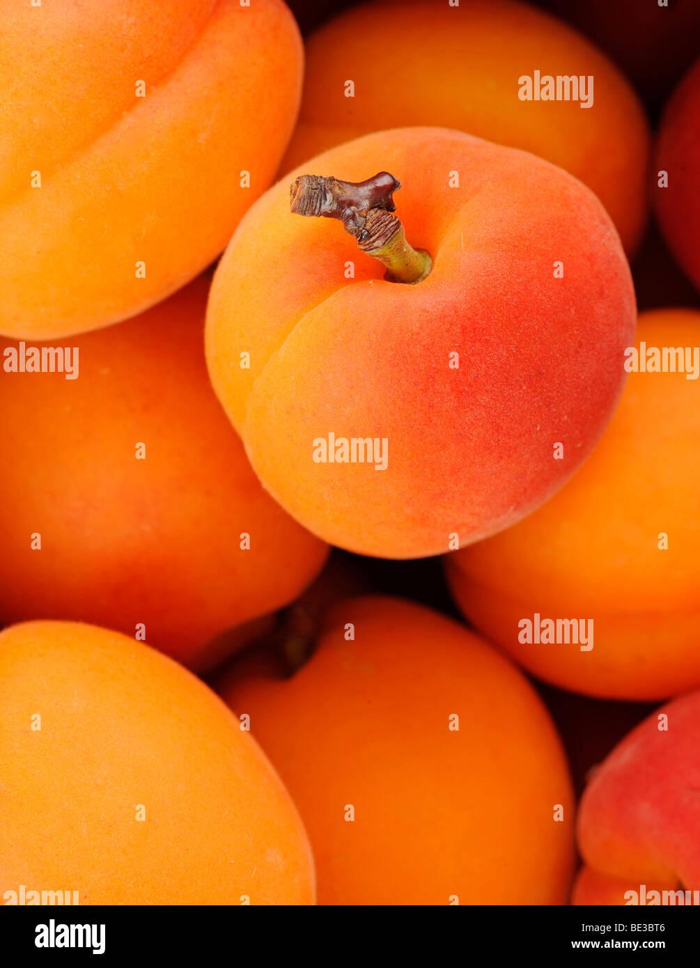 Apricots (Prunus armeniaca) - Stock Image