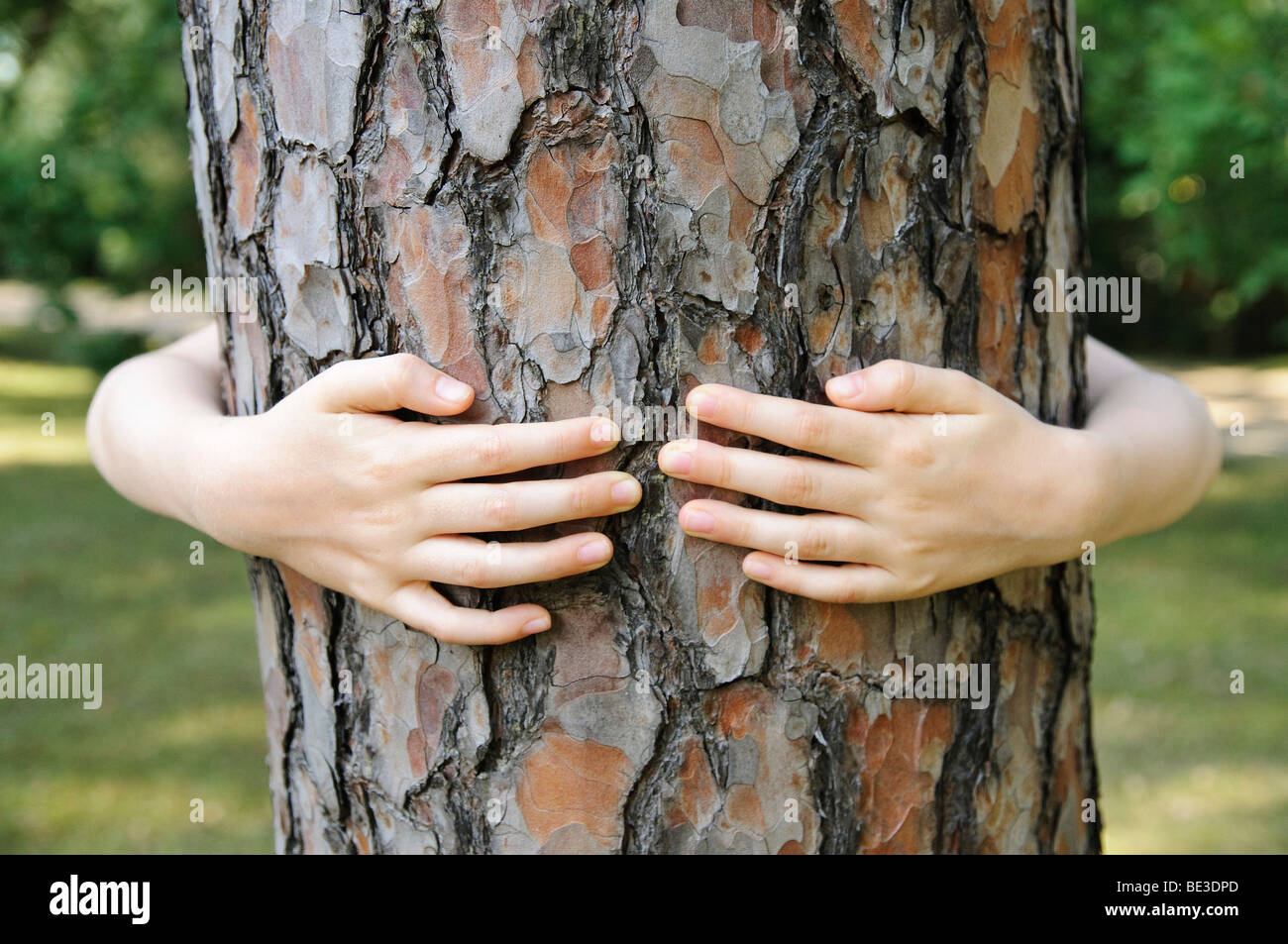 Little girl, 7 years embracing the trunk of a tree Stock Photo