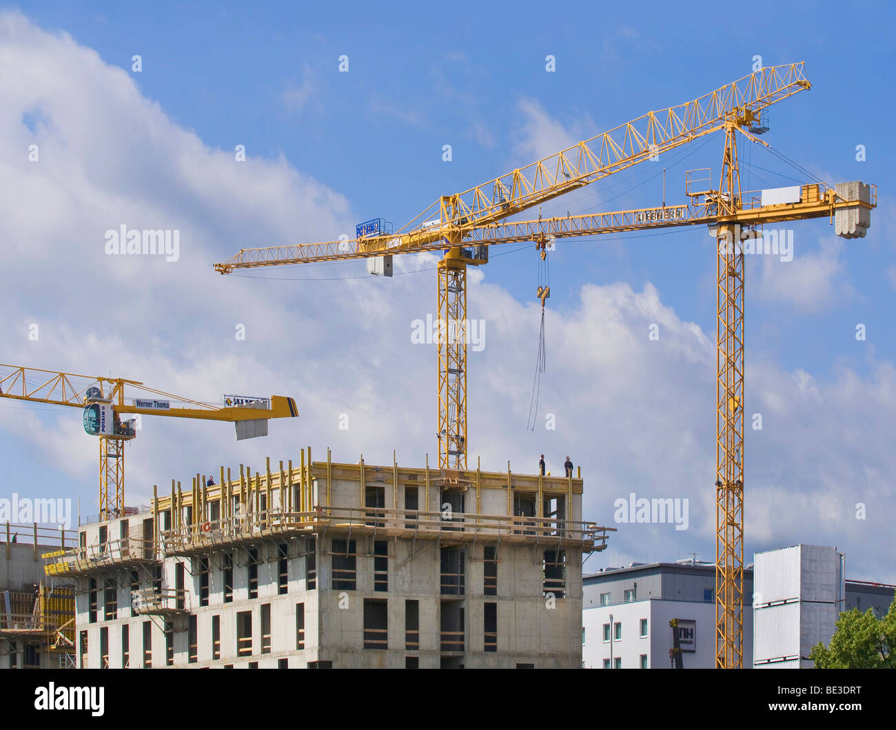 Framing with cranes, North Rhine-Westphalia, Germany, Europe - Stock Image