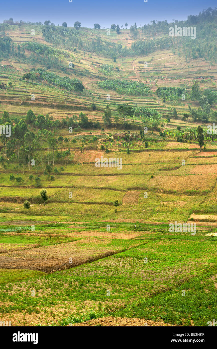 Agricultural fields in the north of Rwanda. Stock Photo