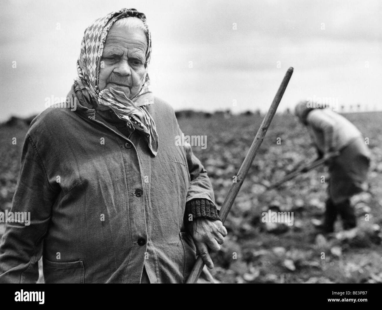 Farmwoman of an LPG, acronym for collectivised farms in the former East Germany, field work, in Borna, GDR, historical - Stock Image