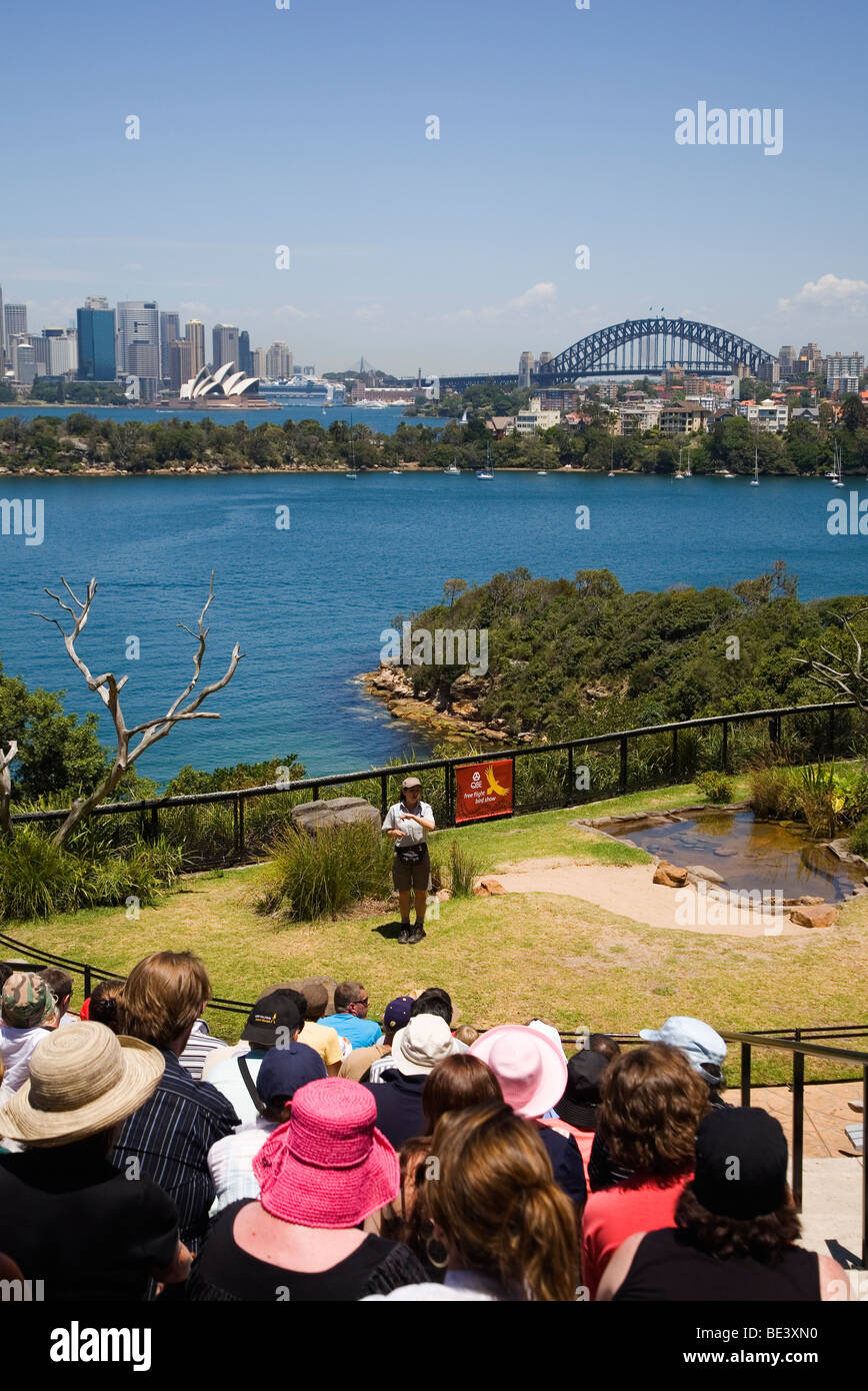 Taronga Zoo freeflight bird show with Sydney harbour in the background. Sydney, New South Wales, AUSTRALIA - Stock Image