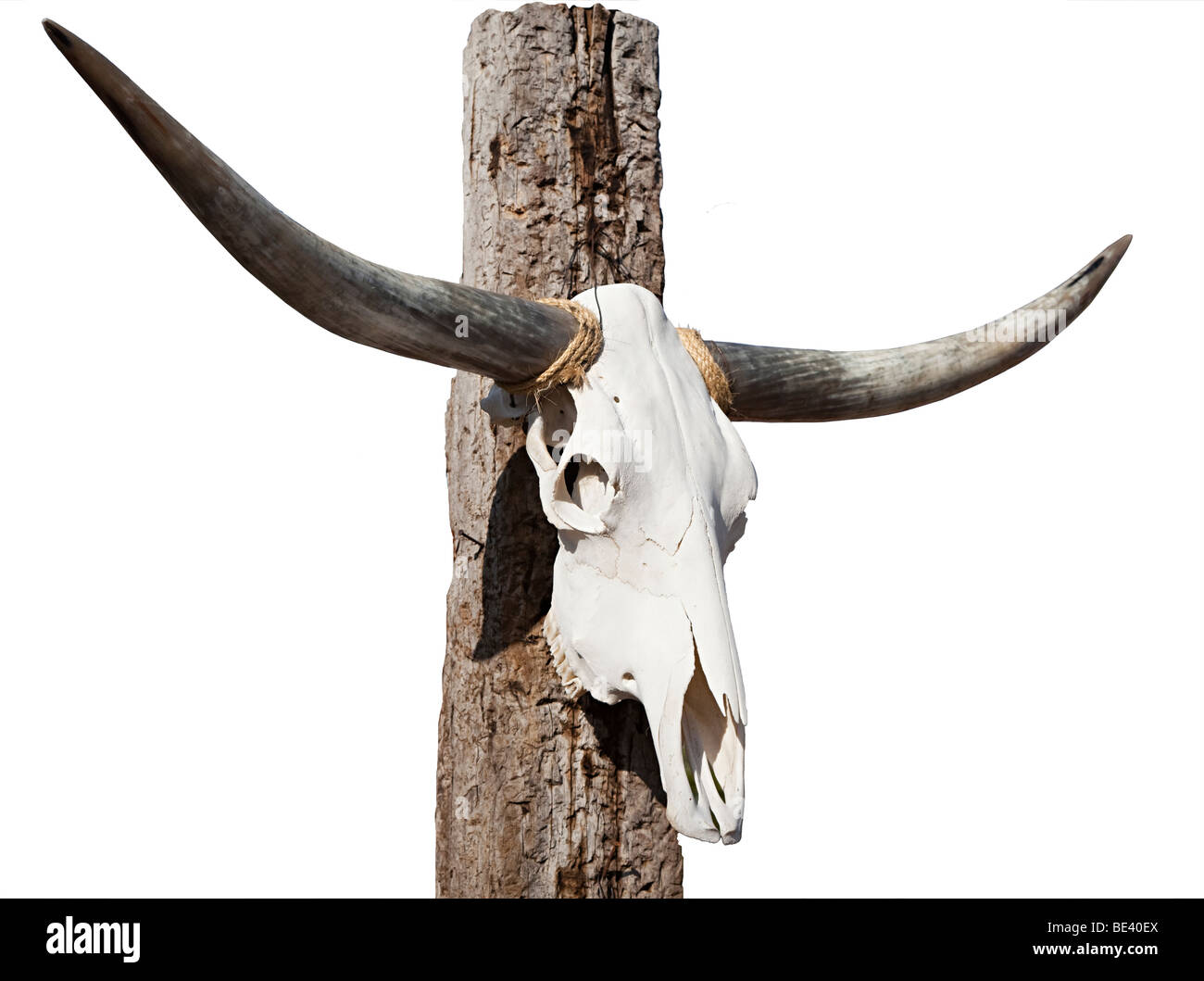 Longhorn cattle skull on post  Texas USA - Stock Image