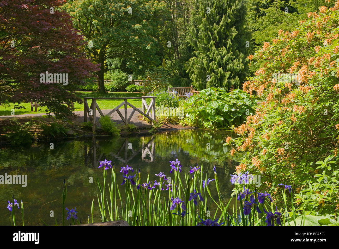 Pond, Benmore Younger Botanic Garden, Argyl and Bute, Scotland. June, 2009 - Stock Image