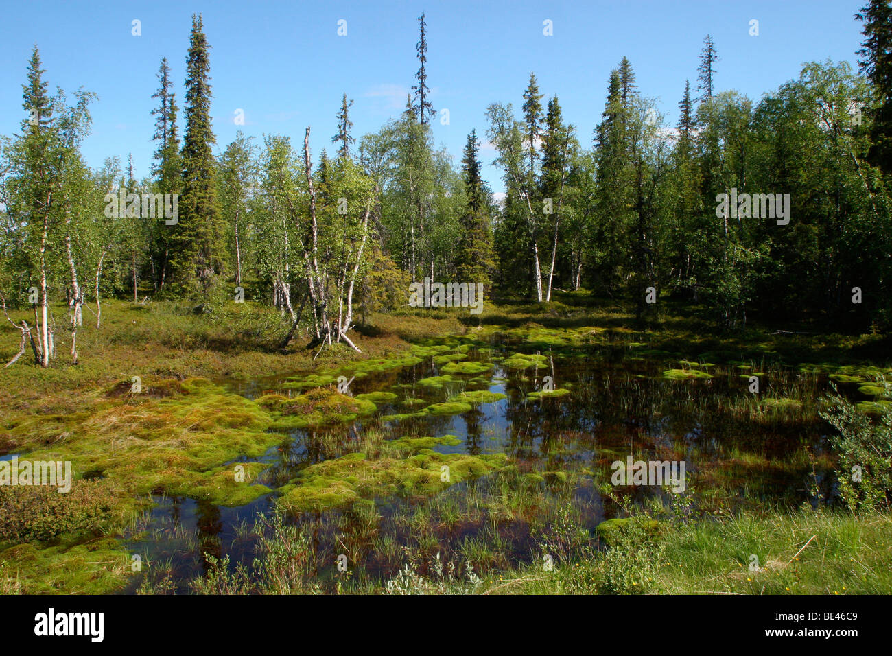 Tundra lake, Lapland, Finland, Europe - Stock Image