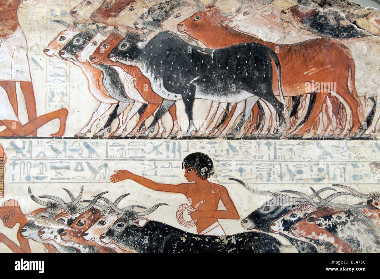 Egyptian wall painting, Nebamun viewing his cattle - British Museum - Stock Image
