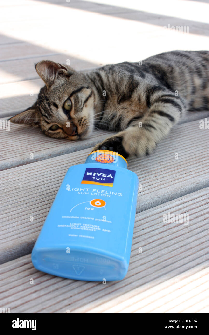 A Cat thinking its time for the Sun cream - Stock Image