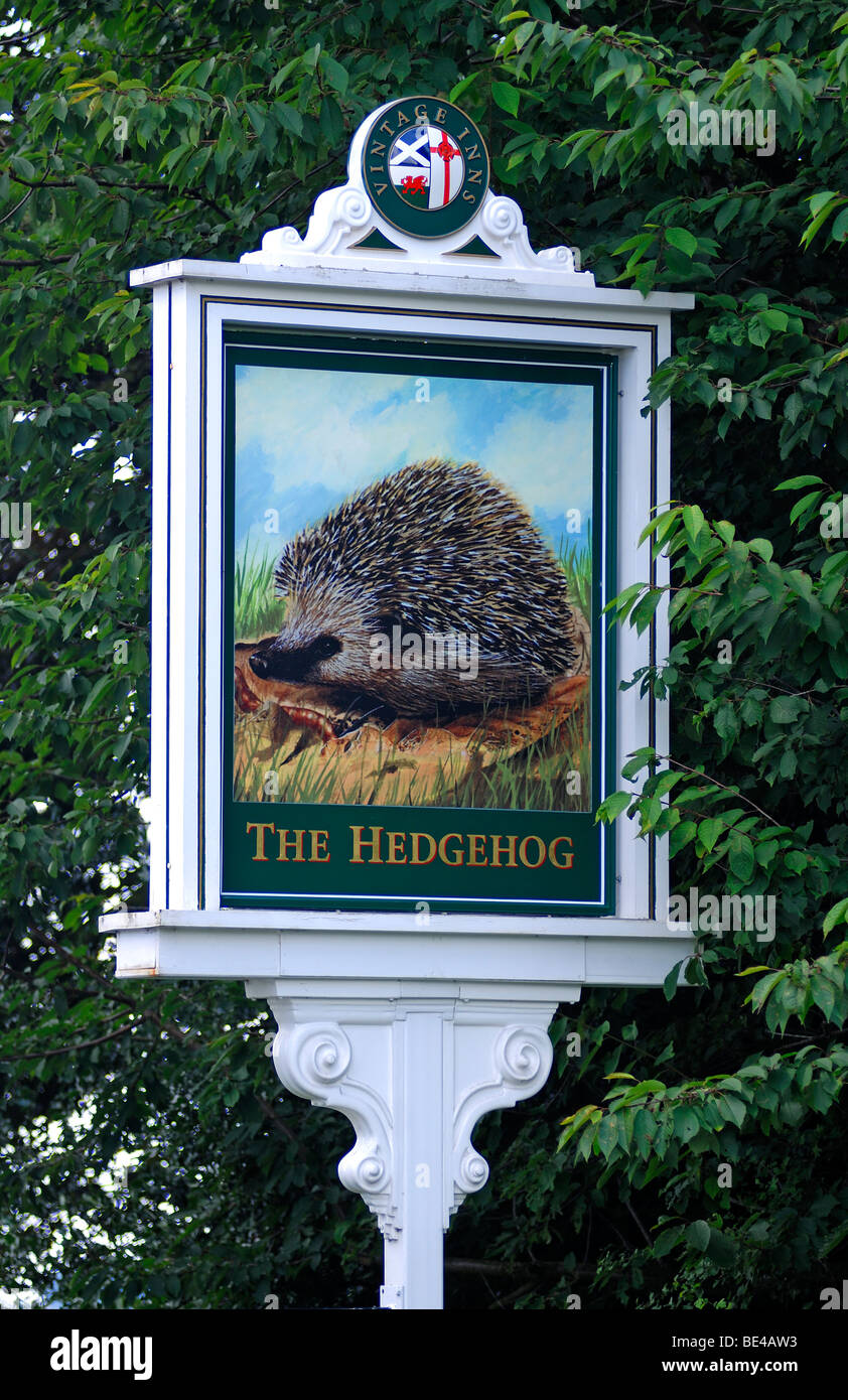 Inn sign, The Hedgehog, Stafford Road, Lichfield, Staffordshire, England, United Kingdom, Europe Stock Photo