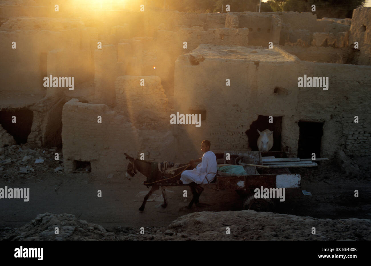 Donkey cart in the last evening light, in the historic centre, Farafra Oasis, Egyptian Sahara, Egypt, Africa - Stock Image