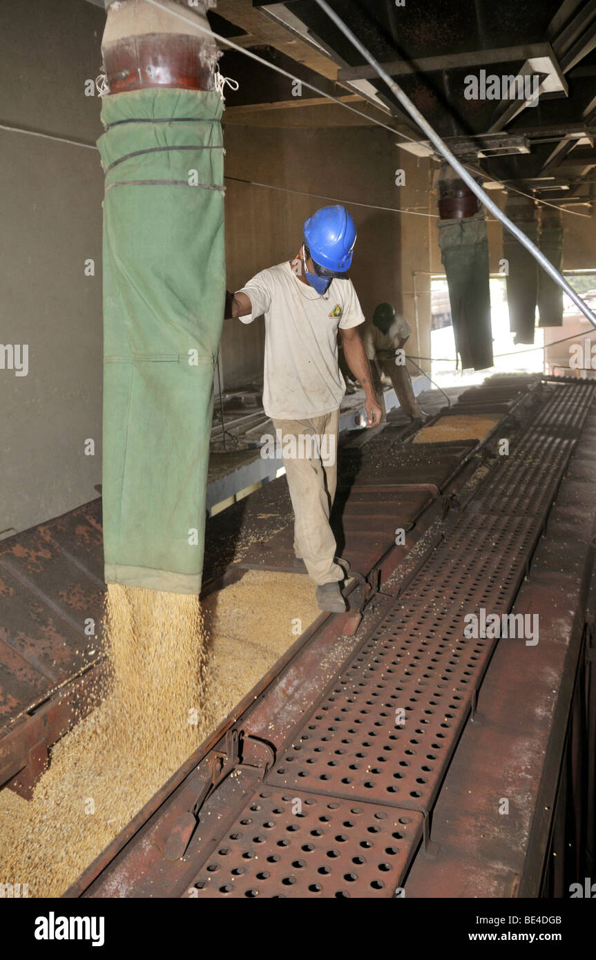Loading a freight wagon with soy, Uberlandia, Minas Gerais, Brazil, South America - Stock Image