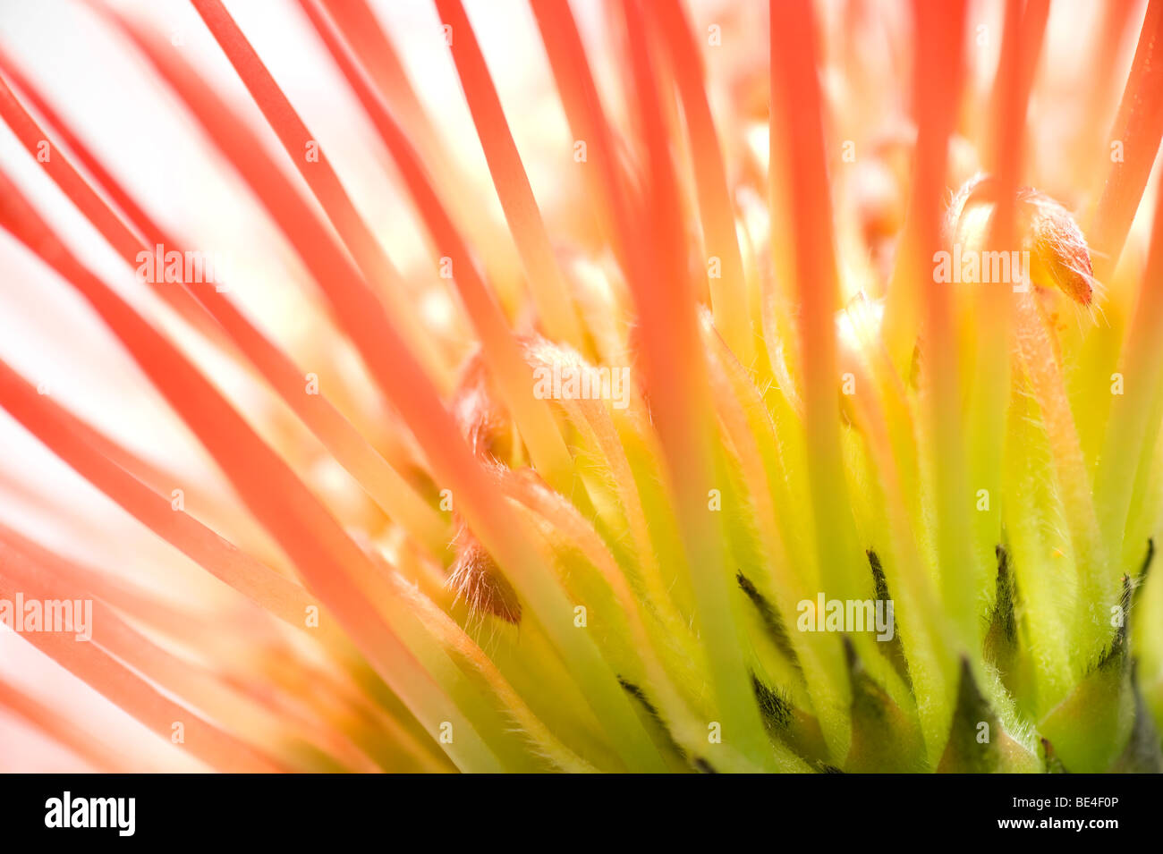 abstract style flower - Stock Image