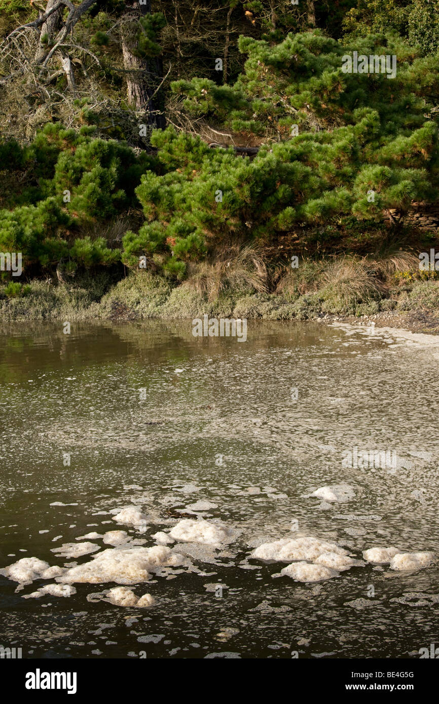 water pollution in brittany near st mathieu point, finistere, france - Stock Image