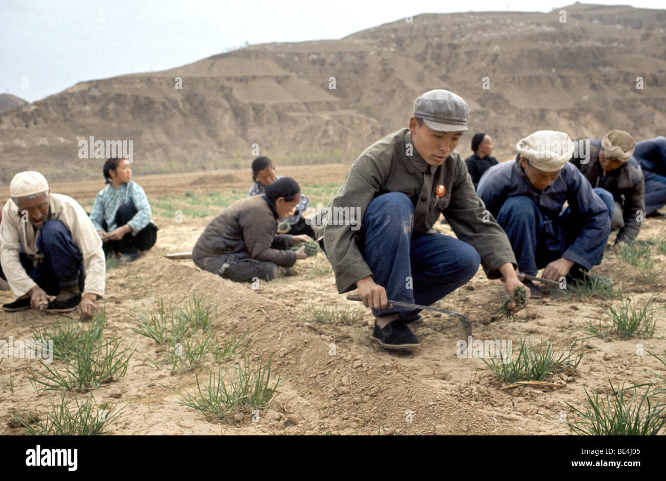 Commune near Canton where students work in the fields next to the peasants during the Cultural Revolution - Stock Image