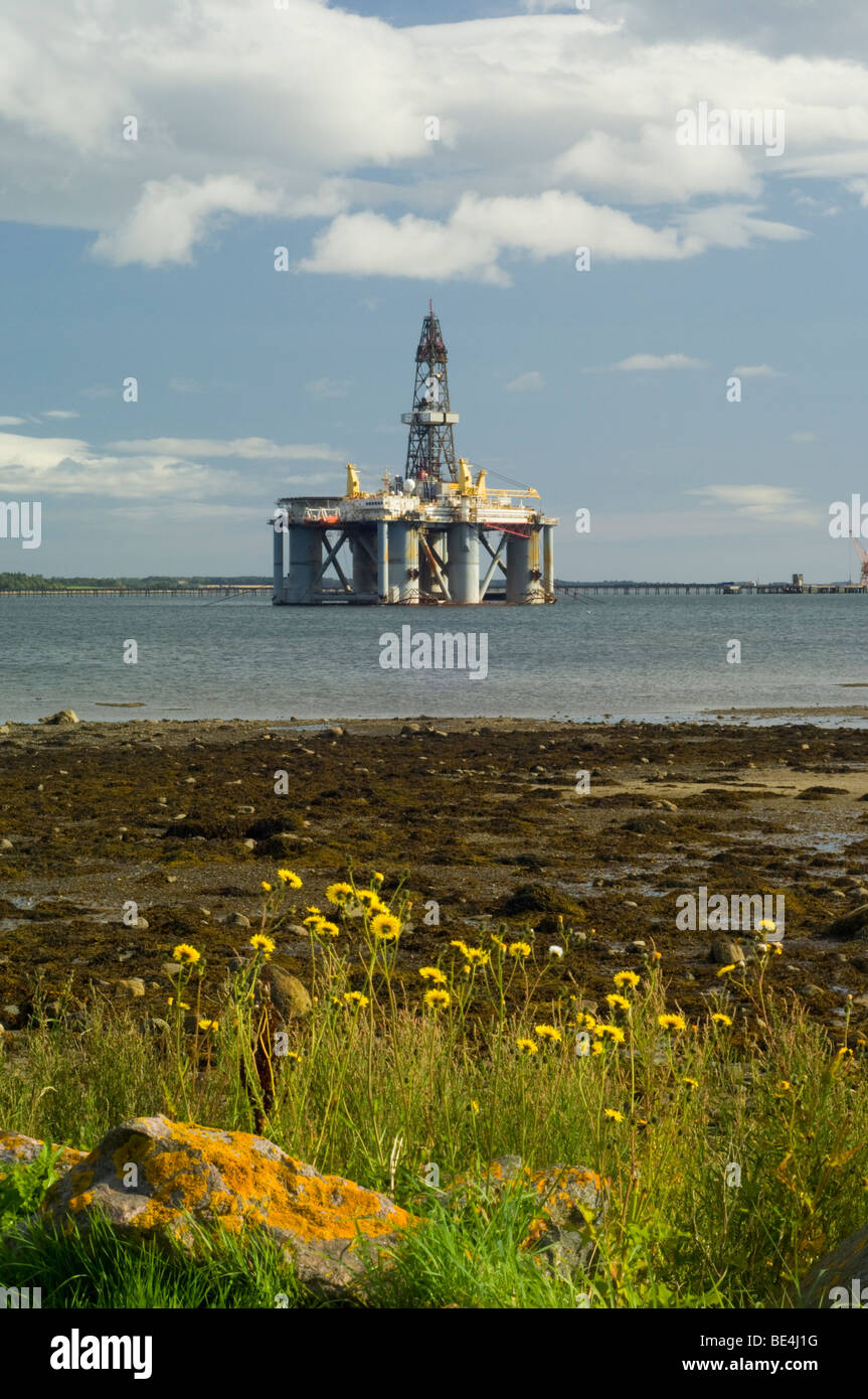 A semi-submersible oil drilling rig, the Arctic 2, moored in the Cromarty Firth, and Perennial Sowthistle, Sonchus - Stock Image