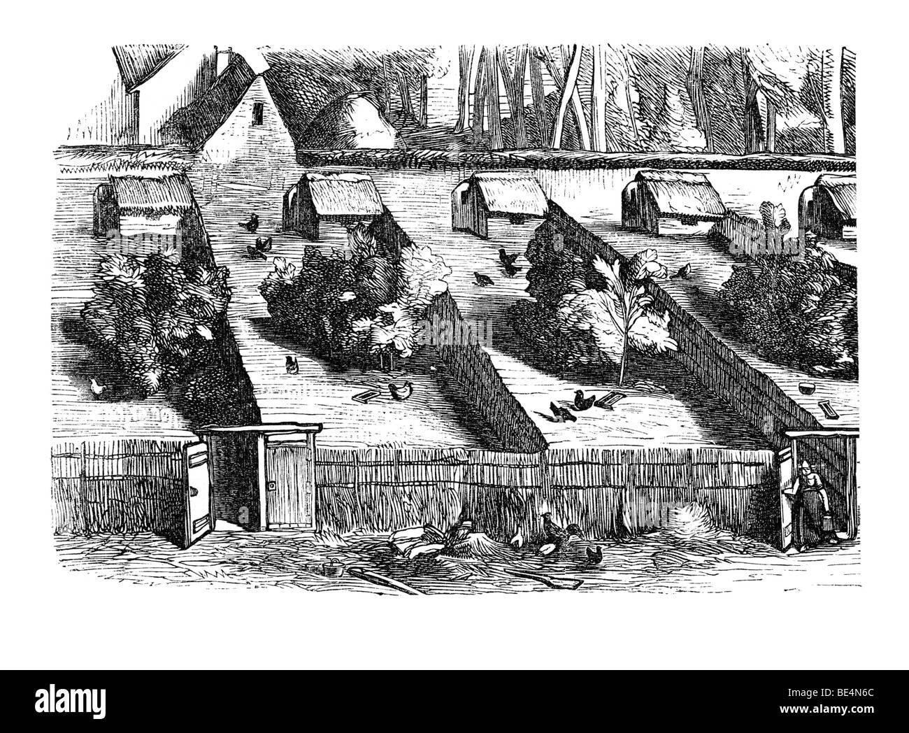 Wilhelmi's chicken farm from: Marie Adenfeller, Friedrich Werner: Illustriertes Koch- und Haushaltungsbuch, - Stock Image